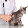 Ветеринарные клиники в Ветлуге